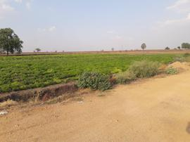 Agricultural Land in Kandukur Mandal - Agricultural Land for Sale in