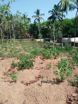 For Sale 1 BHK Farm House In Kulappada Thiruvananthapuram